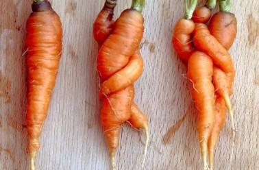 De toute beauté! Des légumes ne répondant pas aux critères esthétiques du commerce pour lutter contre la faim